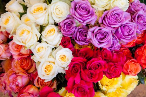 Roses of Multiple Colors