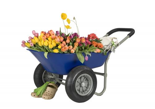 Fresh Flowers in Wheelbarrow