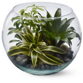 "Our Sphere of Tranquility is a glass garden in a round ""bubble"" bowl.  Long lasting and easy to care for, these gardens are perfect for office or coffee table."