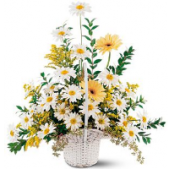 Our sympathy princess basket combines sweet daisies and gerbera's in a sweet expression of your thoughts.