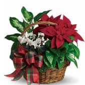 Our Winter Garden Holiday planted baskets come in a variety of sizes. Each garden is different. Shown is our $69.95 size.  Available gardens start at $49.95 and are also available at the $59.95 price point. Prices shown are local prices. For out of town similar items can be delivered. For out of town deliveries please choose $69.95 price.