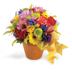 A traditional favorite!  This delightful bouquet is filled with spring favorites including button mums, gerbera daisies, cushion mums, alstroemeria and solidaster. A perfect way to celebrate any number of occasions!