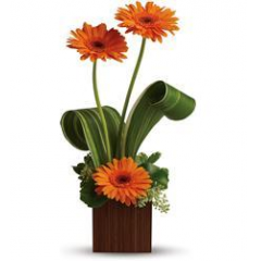 Thanks for all you do!  This contemporary arrangement is simply yet sophisticated and is a perfect gift to show your appreciation.  Gerbera Daisies come in a variety of colors.  Let our design staff pick out the best color to express your gratitude.