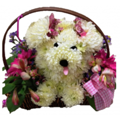Lulu is our puppy arrangement.  Perfect for any occasion.  She can be modified for a new baby, birthday or just about any happy occasion!  Shown is our traditional Lulu.