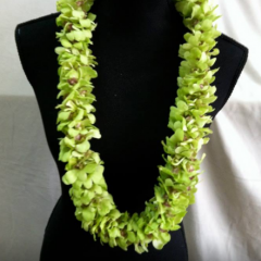 Green dendrobian orchid leis.  All lei orders require advanced ordering.  Varieties subject to availability.  Call for pricing