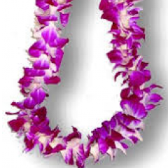 Purple dendrobian leis.  Available throughout graduation season.  These are the most popular leis due to their longevity and availability.  Price varies on time of year and how many we have in stock.