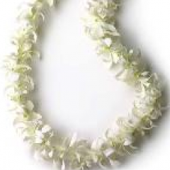 "White dendrobian leis. Available throughout graduation season. These are the most popular leis due to their longevity and availability. Price varies on time of year and how many we have in stock.  These come in single strand or double strand.  Our prices include the ""shipping"" charge you would pay from a vendor from Hawaii.  Remember....when checking prices elsewhere, add in their shipping charges!"