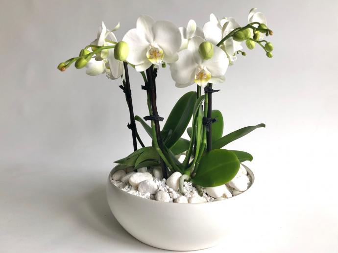 Mini Orchid Garden alternative