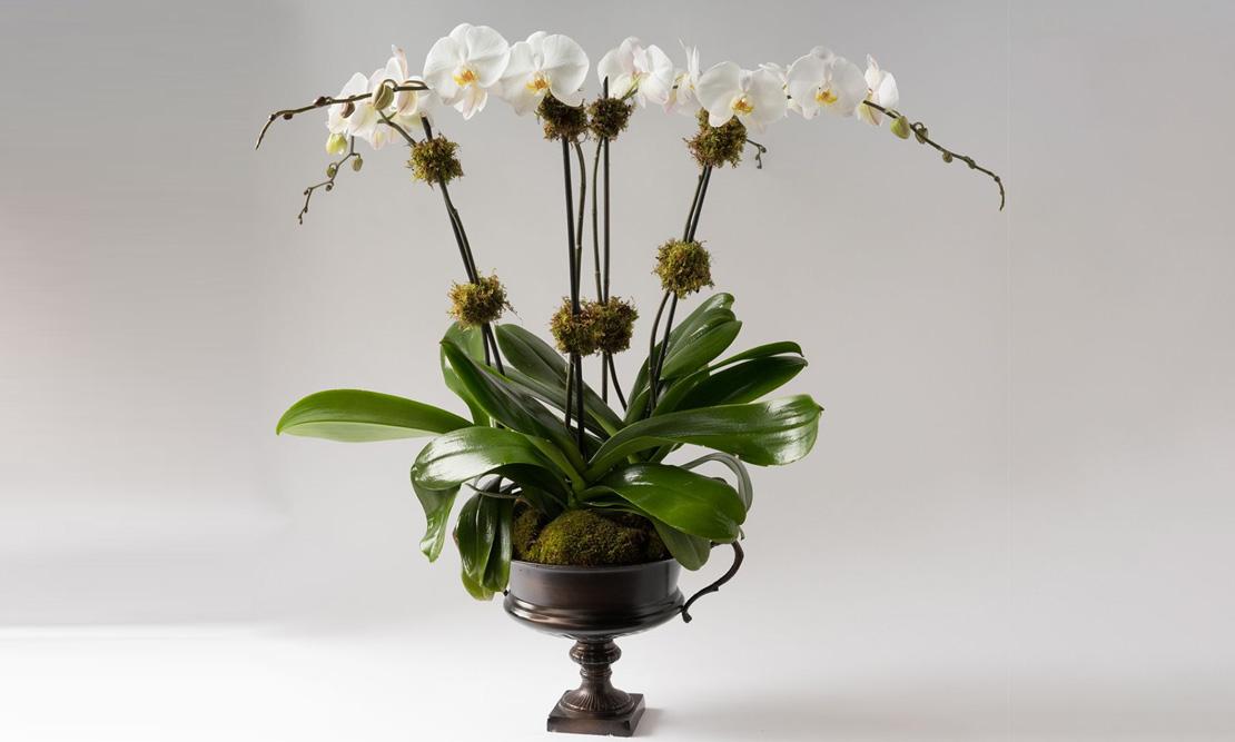 Élan Signature Orchid Arrangement alternative