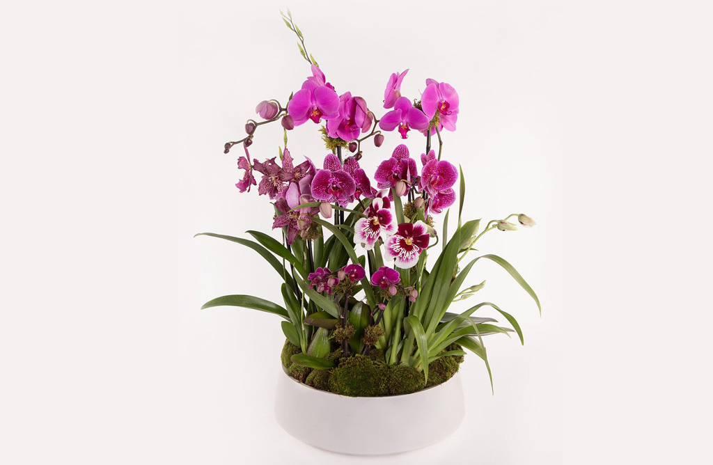 Garden of Orchids alternative