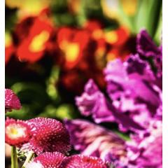 Add More Flowers Addon
