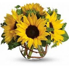 Sunny Sunflowers - As Shown