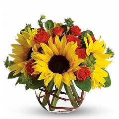 Sunny Sunflowers - Deluxe