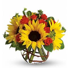 Sunny Sunflowers - Premium