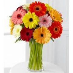 You will want to put this colorful bouquet in your hit parade of gifts to send.Eighteen bold gerbera daisies make it great for men and women of all ages.