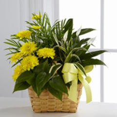 Beautiful assorted green plants are gathered into baskets and fresh flowers are inserted for a burst of color...perfect for any occasion. Plants, flowersand containers may vary. Also available in many price ranges and sizes.Call for more information.We would be happy to custom design a garden for you!