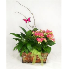 Beautiful lush green plants surround a bright blooming plant are planted into a lovely metal container to create the perfect garden with that European feel.  Green and blooming plants may vary, so please call for more details.