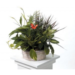 Our Basket Gardens Come In All Sizes And Containers. Call And Have A Sales Associate Tell You What Is Nice This Week.