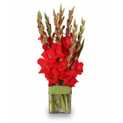 Vase arrangement of brightly colored tall gladiolus especially designed for dad!