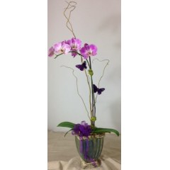 What better way to honor your assistant for their hard work and dedication,  by sending them a beautiful phalaenopsis orchid plant.   **CONTAINERS WILL VARY & ORCHIDS WILL VARY**