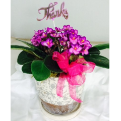 "A perfect 6"" violet to say Thanks for all you do! Violets are low maintenance. Great for a desk    **violets colors will vary*"