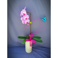 BREATHTAKING ORCHIDS, NO TWO ARE ALIKE. PLEASE CALL FOR AVAILABILITY.