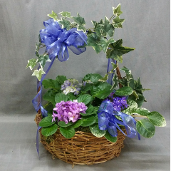 LIVING AFRICAN VIOLETS IN SEVERAL VARIETIES DESIGNED WITH AN OLD ENGLISH GARDEN LOOK. A LOVELY PRESENTATION FOR A PERSON WHO ENJOYS CARING FOR AND GROWING LIVING PLANTS.