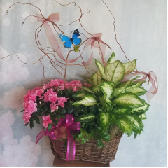 This is a combination of green and blooming plants in a rustic basket accented with curly willow and a butterfly. Bring the feel of the outdoors and a lush garden into your home with this lovely collection of living plants.