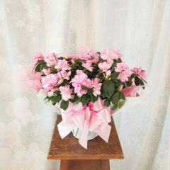AZALEAS ARE ALWAYS A BEAUTIFUL WAY TO SAY THINKING OF YOU. APPROPRIATE FOR ANY OCCASION!