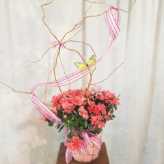 Beautiful Blooms to brighten the Easter Season in a colorful basket with curly willow and butterfly **Colors will vary depending on stock**