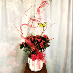 We have a variety of colors in our azaleas in baskets with curly willow and butterflies ***colors & baskets may vary depending on stock***