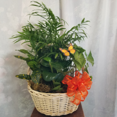"Perfect for home or office, this blend of green plants is perfect for any occasion. **Basket and Plants may vary** Approx. 19"" H x 14"" W"