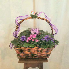 "Living african violets nicely arranged in a basket. A lovely presentation for a person who enjoys caring for and growing living plants. Approx. 15""H x 14""W"
