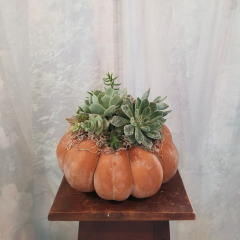 Something unique for the fall season with a medium size pumpkin topped with real succulents. **Size of pumpkins and succulents may vary**