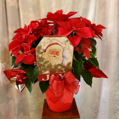 """Holiday Poinsettia stands around 28"""" Tall in a red container, festive bow and a wooden Santa plaque. **some of the plaques may vary**"""