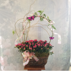 SPECIAL!!!!! DOUBLE BUSHEL BASKET WITH BEAUTIFUL AZALEA PLANTS CURLY WILLOW, BUTTERFLIES MATCHING BOW  ORDER NOW, THEY WILL GO FAST