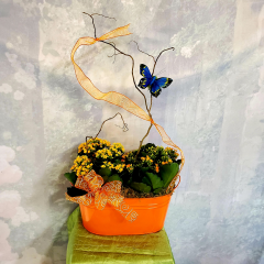 "ALL THE COLOR OF SUMMER IN THESE VIBRANT, HARDY KALANCHOE COMBO DESIGNS. THE LARGE SIZE IS APPROXIMATELY 14"" WIDE AND 28 INCHES TALL AT THE TALLEST POINT. A CHEERFUL GIFT THAT IS APPROPRIATE FOR ANY OCCASSION."