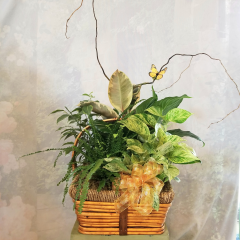 "A beautiful garden with a variety of green plants, curly willow, butterflies.. As shown: Basket size Approx.18""H ,  Upgrade with keepsake Angel in the Premium: Basket size Approx. 22"" H  All are extended with curly willow and butterfly**Plants and angels may vary depending upon availability**"