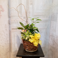 """A beautiful garden with a variety of green plants, curly willow, butterflies.. As shown: Basket size Approx.13""""H , Deluxe: Basket size Approx 13H, Premium: Basket size Approx. 16"""" H  All are extended with curly willow and butterfly...Upgrade a garden with a keepsake Angel for an additional $45.95**Plants and baskets may vary depending upon availability**"""