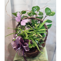 """A beautiful garden with a variety of green plants, curly willow, butterflies.. As shown: Basket size Approx.15""""H , Deluxe: Basket size Approx 20""""H, Premium: Basket size Approx. 26"""" H  All are extended with curly willow and butterfly...Upgrade a garden with a keepsake Angel for an additional $45.95**Plants and baskets may vary depending upon availability**"""
