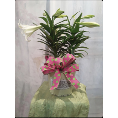 Just in time for Easter we have our beautiful Easter Lilies decorated in a nice metal container