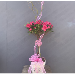 "Our beautiful azalea trees in a white basket with curly willow and ribbon treatment **Colors of plants may vary** Approx 27""H (not including curly willow)***"