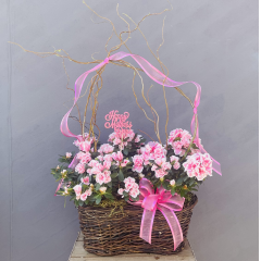 """Send Mom a beautiful double azalea basket with curly willow and ribbon treatment **colors may vary**Approx 16"""" H (not including curly willow)***"""