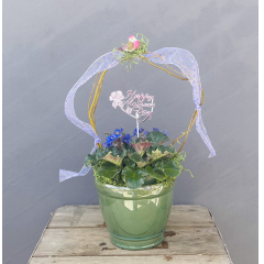 "Our 6"" african violets are a perfect way to say I love you to that special mom**colors may vary** Approx 10"" H (not including curly willow)**"