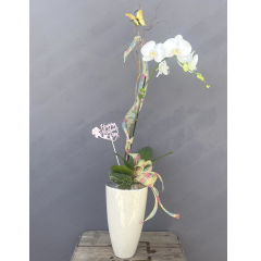 "Stunningly beautiful is the only way to describe these Phaleonopsis Orchids! This is a Log Cabin Florist design and no two are exactly alike. **Approx 32""H**"