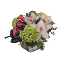 DiBella Flowers & Gifts Las Vegas - The Romance Bouquet- Hot pink mini callas, White Cymbidium Orchids and Green Hydrangea, accented with Eucalyptus