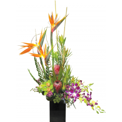 Tropical Sunset A mix of Birds of Paradise, Protea, Dendrobium Orchids and Cymbidium Orchids in a Ceramic Vase