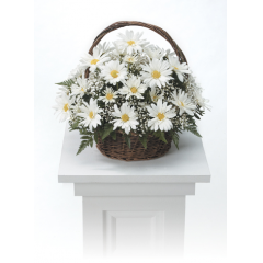 DiBella Flowers & Gifts Las Vegas - White Daisy Basket Arrangement CTT4-21 A sweet basket arrangement of white daisy poms.