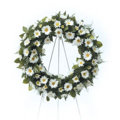 DiBella Flowers & Gifts Las Vegas - White Daisy Wreath CTT4-31 White Daisy Poms in a perfect round wreath.