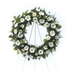 DiBella Flowers & Gifts Las Vegas - White Daisy Wreath CTT4-31 White Daisy Poms in a perfect round wreath.